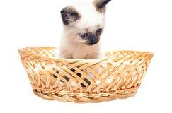 蓬松小猫 免版税库存图片