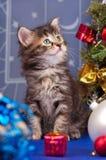蓬松小猫 免版税库存照片