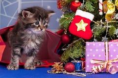 蓬松小猫 库存照片