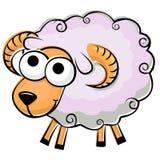 蓬松滑稽的绵羊 库存图片