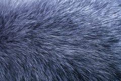 蓬松灰色毛皮纹理或背景 库存照片