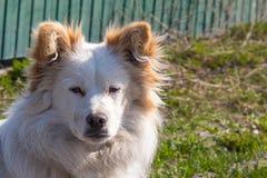 蓬松狗今后看 美丽的虔诚小的杂种动物 库存照片