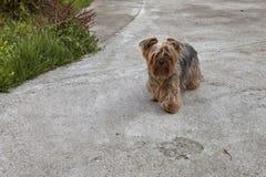 蓬松狗在后院 免版税库存图片