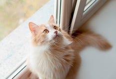 蓬松的猫 库存图片