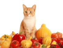 蓬松的cat2 库存图片