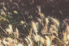 蓬松矮人伯根地兔宝宝喷泉草在公园西班牙 墙纸模板,激动人心的秋天秋天图象 免版税库存照片