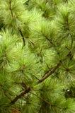 蓬松结构树 免版税图库摄影