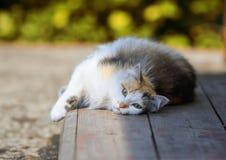 蓬松美丽的猫在木门廊说谎在阳光下 免版税库存照片