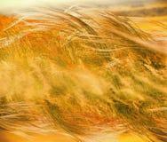 蓬松草-柔滑的草 免版税图库摄影