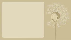 蓬松蒲公英播种在风的飞行 免版税库存图片
