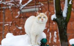 蓬松蓝眼睛的猫坐砖房子篱芭在冬日 免版税库存照片