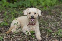 蓬松逗人喜爱的狗愉快和 免版税库存图片