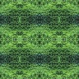 蓬松金钟柏绿色针背景,剪贴薄的背景,顶视图 无缝的样式万花筒蒙太奇 免版税库存照片