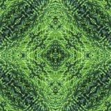 蓬松金钟柏绿色针背景,剪贴薄的背景,顶视图 无缝的样式万花筒蒙太奇 库存照片