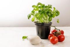蓬蒿一个罐、新鲜的蕃茄和无盐干酪的草本植物在锂 免版税图库摄影