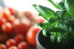 蓬蒿和蕃茄 免版税库存图片
