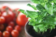 蓬蒿和蕃茄 免版税图库摄影