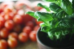 蓬蒿和蕃茄 图库摄影