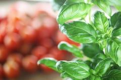 蓬蒿和蕃茄 库存照片