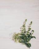 蓬蒿和茴香 芬芳厨房草本 库存图片