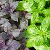 蓬蒿新鲜的绿色叶子 免版税库存照片