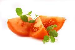 蓬蒿新鲜的蕃茄 免版税库存图片