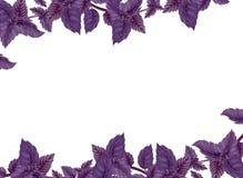 蓬蒿的例证 liane装饰  库存照片