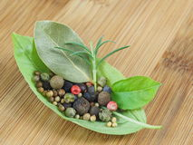 蓬蒿的叶子用香料 免版税库存照片