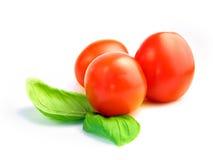 蓬蒿蕃茄 库存照片