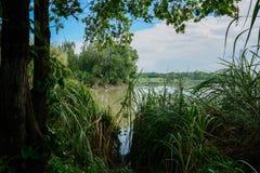 蔓延的湖边在多云夏天早晨 免版税库存图片