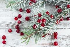 蔓越桔和圣诞树分支 图库摄影
