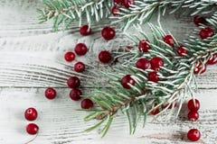 蔓越桔和圣诞树分支 库存照片