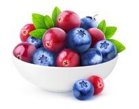 蔓越桔和蓝莓在碗 免版税图库摄影