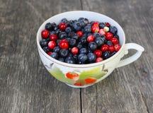 蔓越桔和蓝莓 免版税库存照片