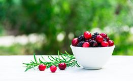 蔓越桔和黑莓在一个白色碗在一张桌上在庭院里 复制空间 免版税库存照片