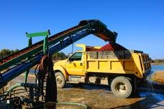 蔓越桔收获传送带果子装入程序和卡车 库存图片