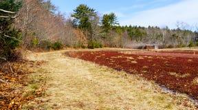 蔓越桔沼泽的土气棚子 免版税库存照片