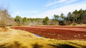 蔓越桔沼泽的土气棚子 图库摄影