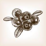 蔓越桔莓果手拉的剪影传染媒介 免版税图库摄影