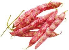 蔓越桔豆 免版税库存图片