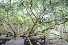 蔓延的结构树 图库摄影