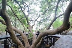 蔓延的结构树 库存照片