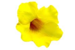黄蔓 库存照片