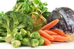 蔬菜冬天 免版税库存图片