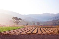 蔬菜园艺 免版税库存图片