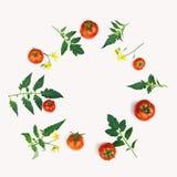 蕃茄、叶子和花的构成 图库摄影
