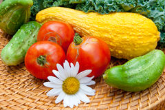 蕃茄、黄瓜、南瓜和无头甘蓝圆白菜源于地方g 库存图片