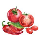 蕃茄。 在空白背景的水彩绘画 库存图片