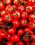 蕃茄例证有飞溅水彩织地不很细背景 异常的例证水彩 库存图片