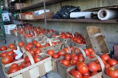 蕃茄准备好在篮子的地方农夫` s市场 免版税库存照片